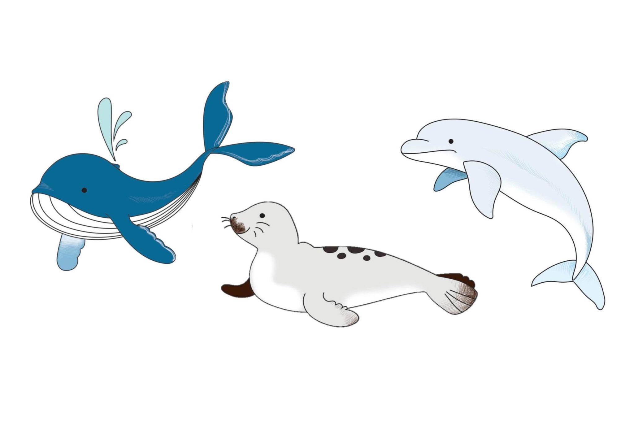 Apprendre A Dessiner Des Animaux Marins En 5 Etapes